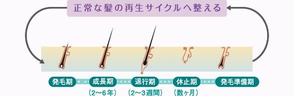 正常な髪の再生サイクルへ整える